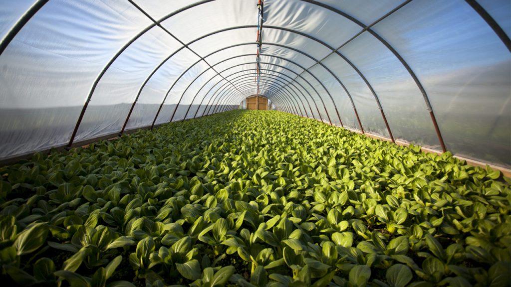 ترجمه تخصصی کشاورزی